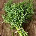 Dill, Bouquet Herb Seeds