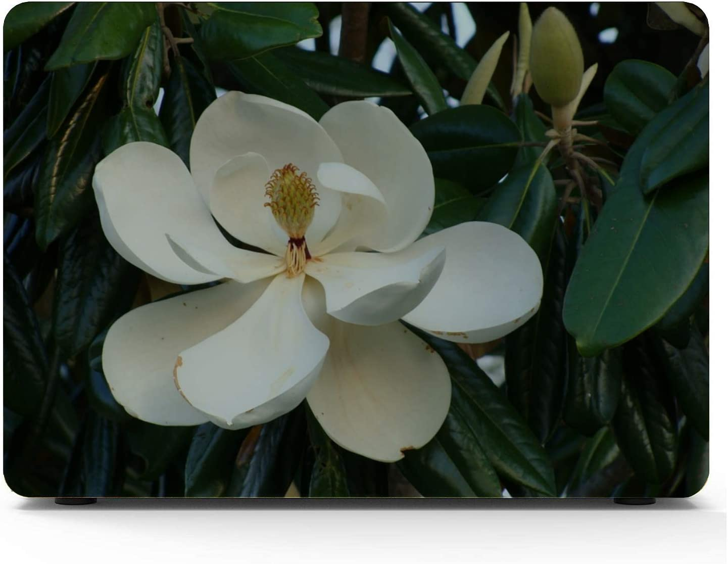 Laptop Pro Accessories Magnolia Tree Magnolia Blossom Flower Plant Leaves MacBook Air Case 2018 Hard Shell Mac Air 11//13 Pro 13//15//16 with Notebook Sleeve Bag for MacBook 2008-2020 Version