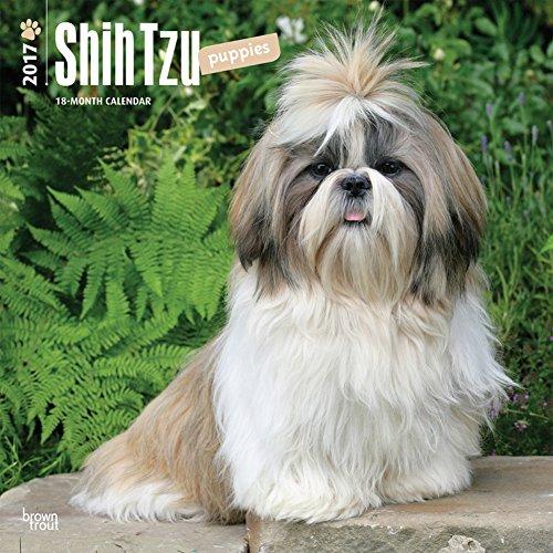 Shih Tzu Puppies - 2017 Calendar 12 x 12in