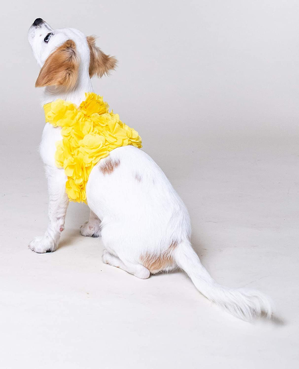 Floral Pink XS, Yellow Purple or Yellow Dog Harness and Leash Set for XSmall and  Small Breeds Very Stylish and Cute