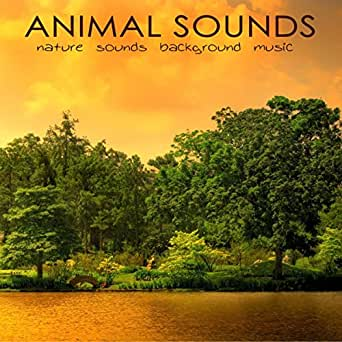 Feng Shui (Background Music) by Nature Sounds White Noise
