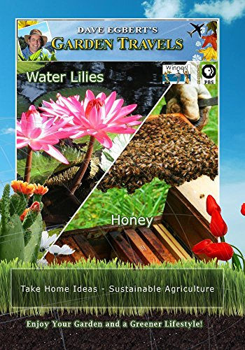 Garden Travels Water Lilies Honey