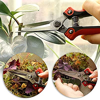 SUMNACON Gardening Sharp Pruning Shears - Heavy Duty Stainless Steel Hand Pruner Pruning Scissors Snip Tree Trimmer with Safety Lock, Ideal Branches/Rose Cutter with Comfortable Handle : Garden & Outdoor