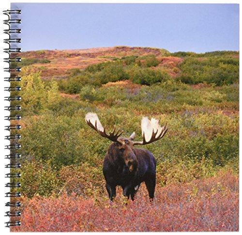 Danita Delimont–Wildlife–Moose Bull野生生物、デナリ国立公園、アラスカ–us02ska3092–Steve Kazlowski–Drawing Book 8x8 drawing book db_87703_1