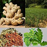 50Pcs Herbal Ginger Patch, Promote Blood