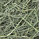 Oxbow Animal Health Orchard Grass Hay - All Natural