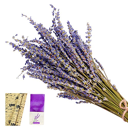 EMISH Lavender Bundles, freshly harvested Real Natural Lavender bunch Royal Velvet Lavender Bundles for DIY Home Office Party Wedding Decor, 16''-18'' Long by EMISH
