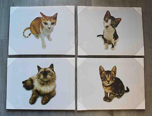 Lote de 4 cuadros con imagen de gatos en lienzo 30x40cm: Amazon.es: Hogar