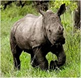 Stick It On Your Wall Baby Animals - Baby Rhino Mini Poster - 40x40cm