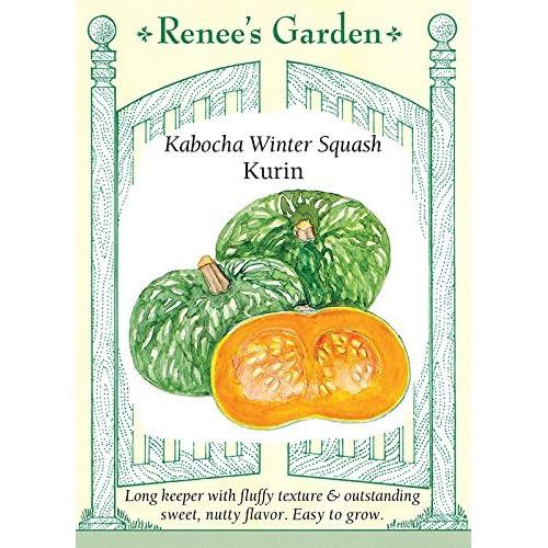 'Kurin' Kabocha Winter Squash supplier