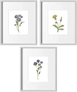 Todo Bien Design Inc Home Wall Decor Watercolor Botanical Prints - (Set of 3) - Unframed (8x10 Flower-2)