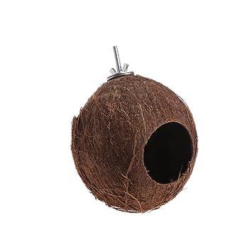 Kathope - Jaula Colgante de Coco, diseño de pájaro: Amazon.es ...