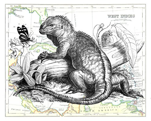 11x14 Inch Fine Art Print of an Iguana and Butterfly, Overlaid on a Map of the Caribbean West Indies. Size: 11x14 Inches (IguanaMap1114)