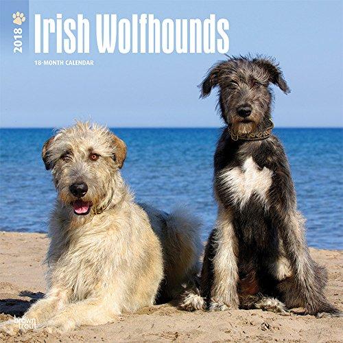 Irish Wolfhounds 2018 12 x 12 Inch Monthly Square Wall Calendar, Animals Irish Dog Breeds (Multilingual Edition)