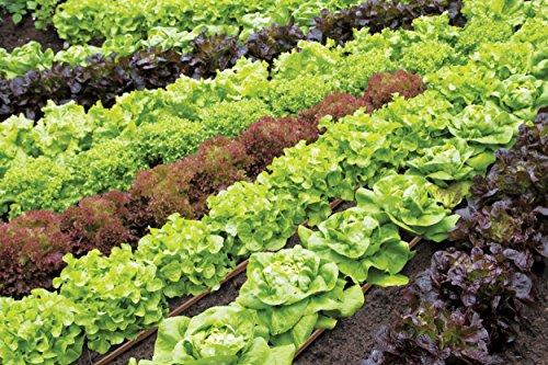 Rain Drip R567DT Drip Watering Vegetable Garden Kit