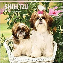 Amazoncom Shih Tzu 2018 12 X 12 Inch Monthly Square Wall Calendar