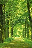 Forest Path Poster Print by Hein Van Den Heuvel, 24x36 Photography Poster Print by Hein Van Den Heuvel, 24x36