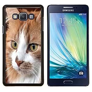 TECHCASE---Cubierta de la caja de protección para la piel dura ** Samsung Galaxy A7 ( A7000 ) ** --Gato Cymric Americano de Pelo Corto Casa