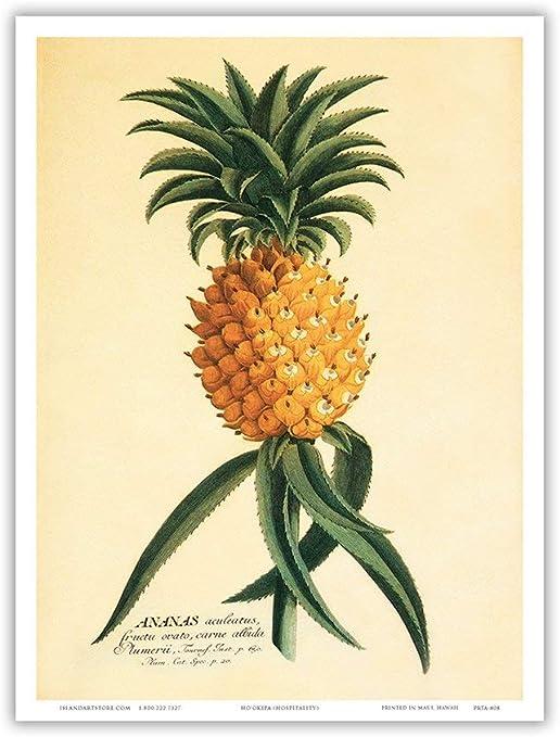 Book Plate Hawaiian Pineapple Ho'okipa Hospitality 18th Century Plantae