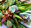 15 Assorted Succulent & Cactus Cuttings. No 2 Cuttings Alike. Great for Terrariums, Mini Gardens, and as Starter Plants.
