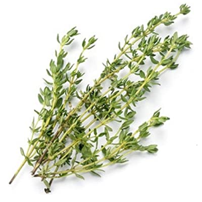Sow No GMO Thyme Savory English Thyme Non GMO Heirloom Aromatic Culinary Garden Herb 500 Seeds: Home & Kitchen