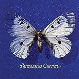 Parnassius Guccini
