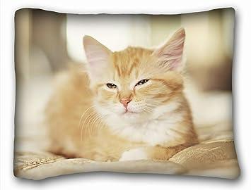 Amazon.com: Animal funda de almohada animales rojo cardenal ...