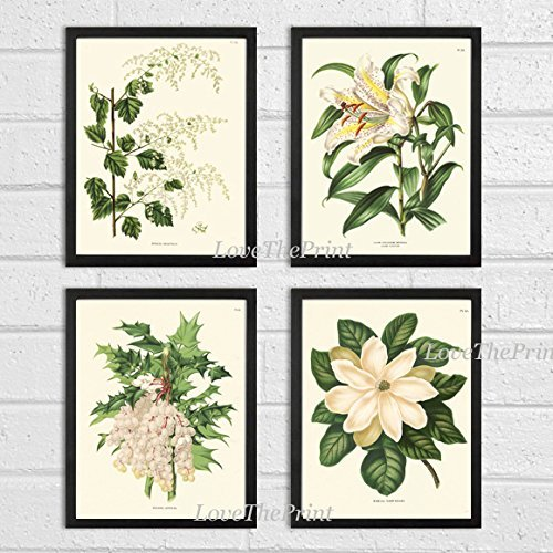 White Flower Print Set of 4 Prints Antique Beautiful Flowers Lily Grapes Fruit Large Magnolia Spring Summer Nature Home Room Decor Wall Art (Gourmet Settings Frame)