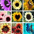 Wintefei 50 Pcs Sunflower Helianthus Annuus Seeds Easy Grow Garden Plants Bonsai Decor