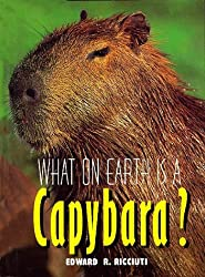 What on Earth Is a Capybara?