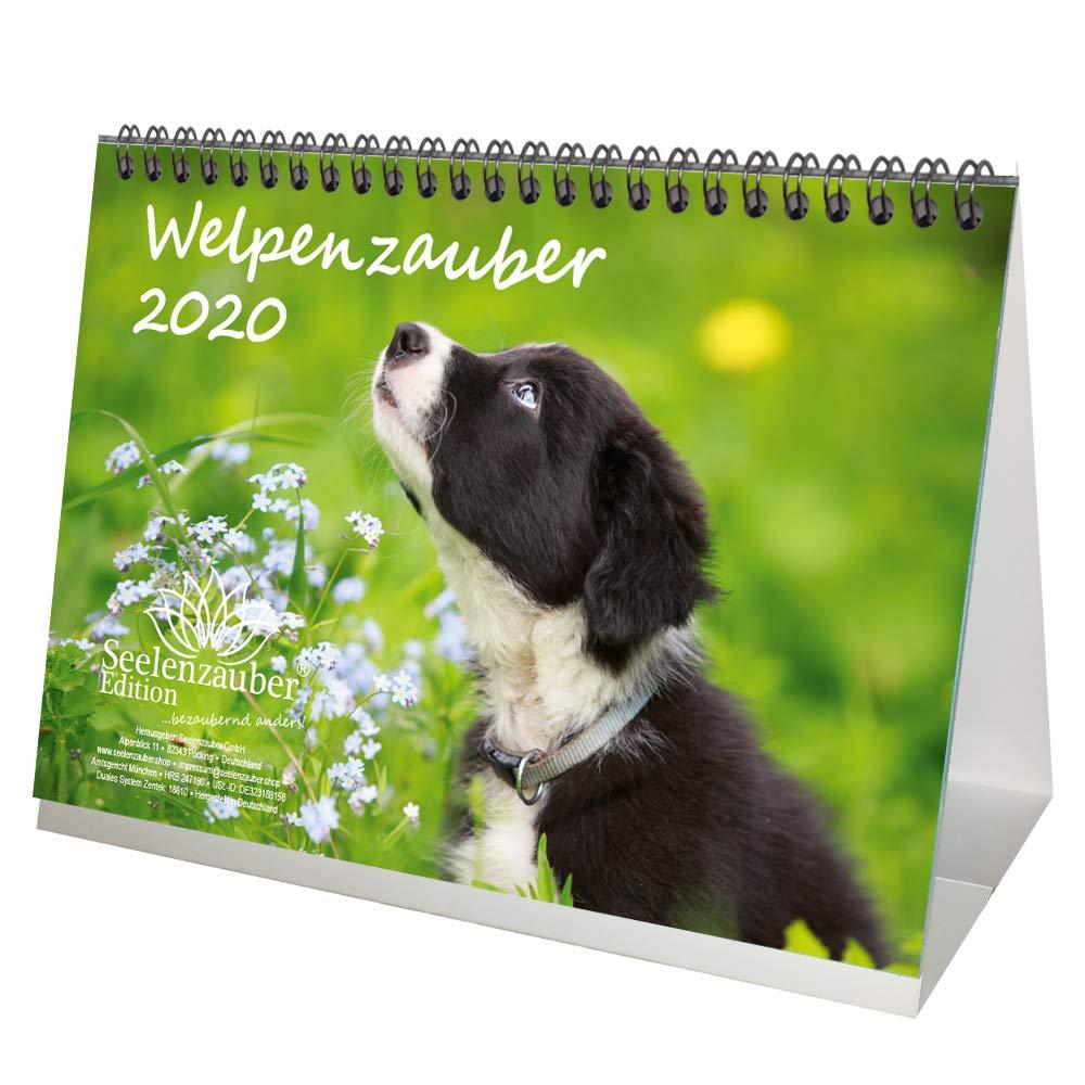 Welpenzauber DIN A5 Tischkalender 2020 Hunde Welpen   Seelenzauber