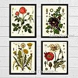 Botanical Flower Set of 4 Art Prints Antique Beautiful Red Rose Poppy Large Black Hollyhock Dandelion Spring Summer Garden Home Room Wall Decor Unframed KOH