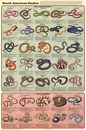 Laminated North American Snakes Poster