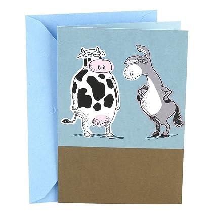 Amazon Hallmark Shoebox Funny Birthday Greeting Card Cow