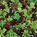 Park Seed Micro Mini Greens Lettuce Seeds