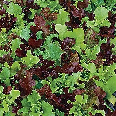 Park Seed Micro Mini Greens Lettuce Seeds