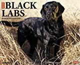 Just Black Labs 2015 Wall Calendar