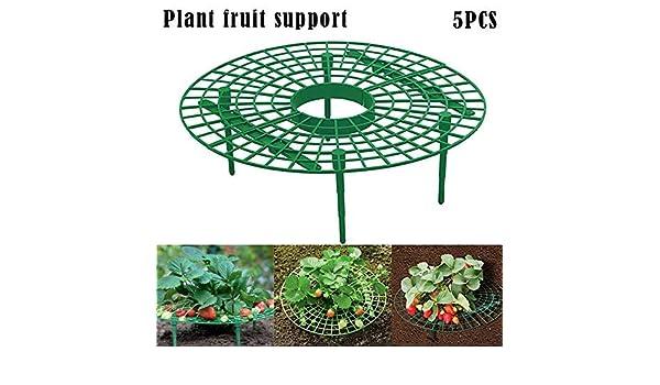 Dovlen 5Pcs Fresa Planta Cultivo Soportes Keep Fresas Apagado ...