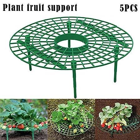 Monggood 5Pcs Fresa Planta Cultivo Soportes Keep Fresas Apagado ...