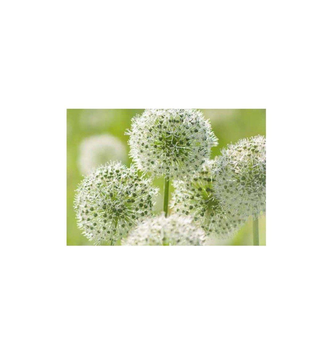 Metallmichl Edelrost Blumenstecker Allium 20 cm Durchmesser /(flach ...