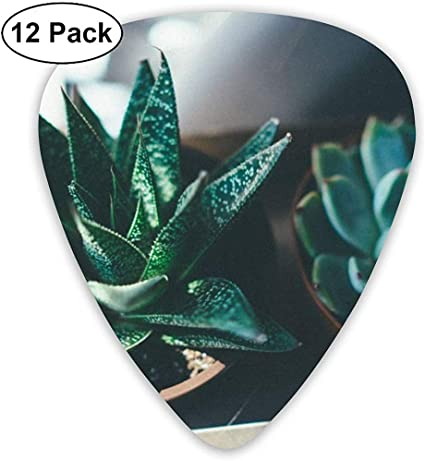 Set de dos púas de guitarra de plantas suculentas verdes 12 púas ...