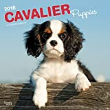 Cavalier King Charles Spaniel Puppies 2018 12 x 12 Inch Monthly Square Wall Calendar, Animals Dog Breeds Puppies