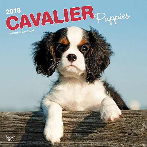Cavalier King Charles Breed (Cavalier King Charles Spaniel Puppies 2018 12 x 12 Inch Monthly Square Wall Calendar, Animals Dog Breeds Puppies)