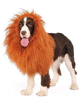 melena de león para perros