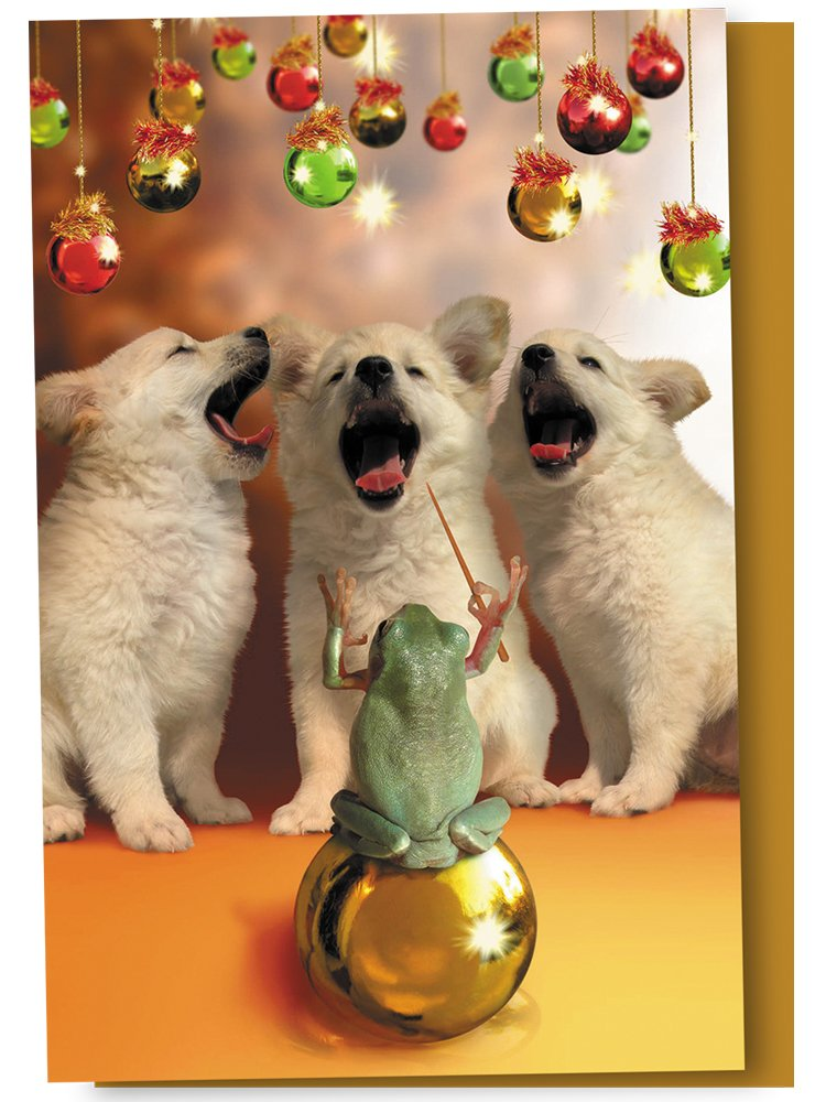 Tree-Free Greetings Christmas Cards and Envelopes, Set of 12, 4-Inch X 6-Inch, Herald Puppies (FS93510) Tree-Free Greetings Canada