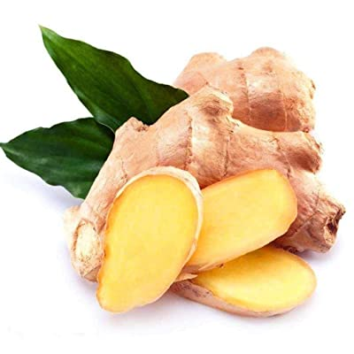 Youandmes 100pcs Organic Ginger Turmeric Seeds Heirloom Non-GMO Vegetable Seeds for Home Garden : Garden & Outdoor