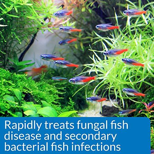 Api Fungus Cure Freshwater Fish Powder Medication Buy
