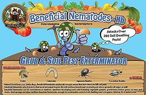 5 Million Live Beneficial Nematodes Hb - Soil Pest Exterminator BugSales