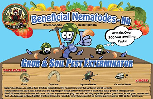 50 Million Live Beneficial Nematodes Hb - Soil Pest Exterminator by Bug Sales