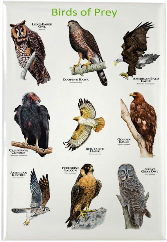 CafePress – del norte americano aves de presa – rectangular imán, 2
